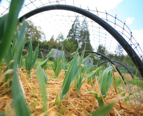plants on SOU Farm
